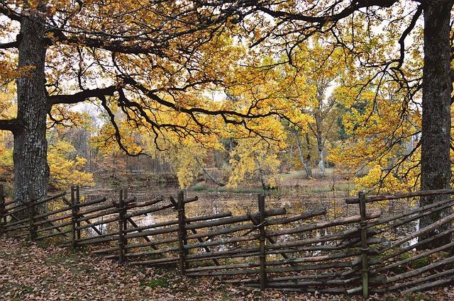 autumn-2862602_640